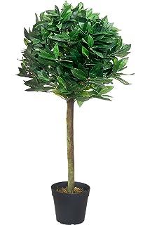 Weihnachtsbaum Goldica Picea conica 5060cm hoch im Zinkeimer