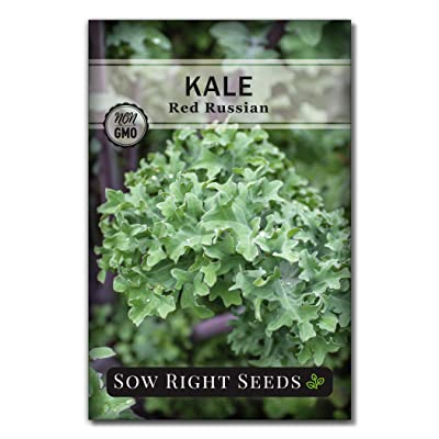 Sow Right Seeds - Red Russian Kale Seed for Planting - Non-GMO Heirloom Packet with Instructions to Plant a Home Vegetable Garden, Great Gardening Gift (1) : Garden & Outdoor
