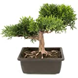 Cedro bonsai artificiale in vasetto, 20 cm - Bonsai in vaso / Cedro in vaso - artplants