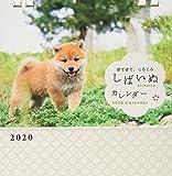 しばいぬカレンダー2020(卓上)([カレンダー])