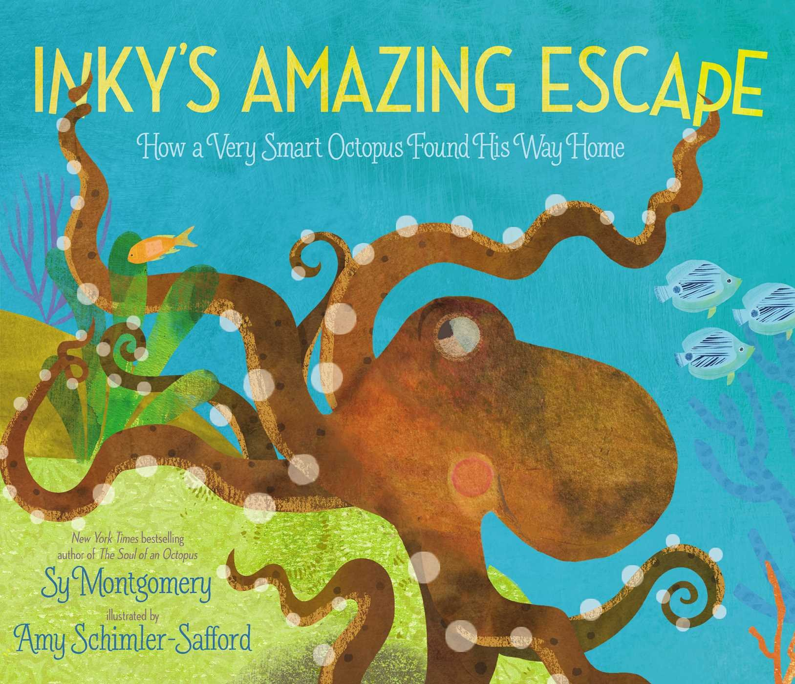 Inkyu0027s Amazing Escape: How A Very Smart Octopus Found His Way Home: Sy  Montgomery, Amy Schimler Safford: 9781534401914: Amazon.com: Books
