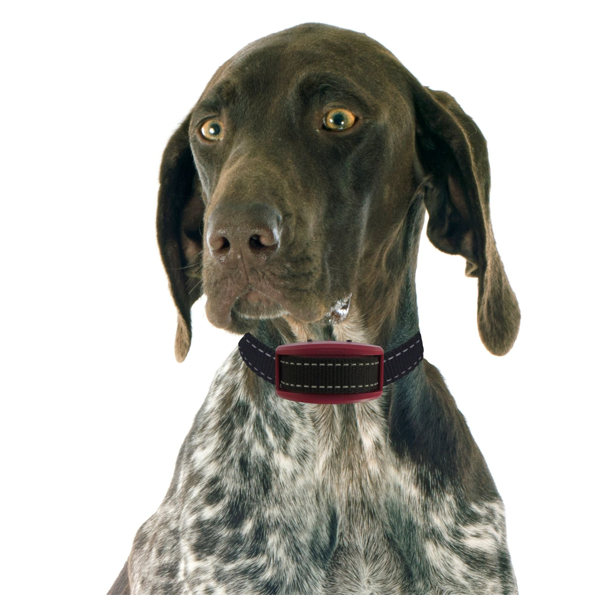 Our K9 Garnet Bark Collar - Shock Collar - E Collar - Bark Collar Large Dog
