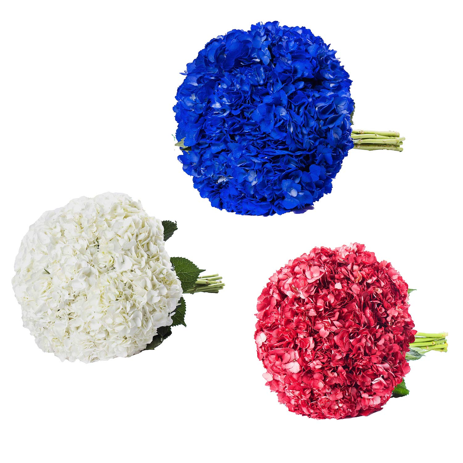 Farm Fresh Natural Painted White, Red & Blue Hydrangeas - Pack 15 by Bloomingmore (Image #2)