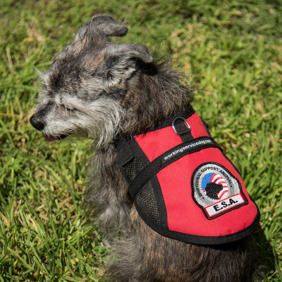 Premium Small Dog Emotional Support Dog ESA Mesh Vest (15'' - 18'' Girth (XS), Red) by Working Service Dog