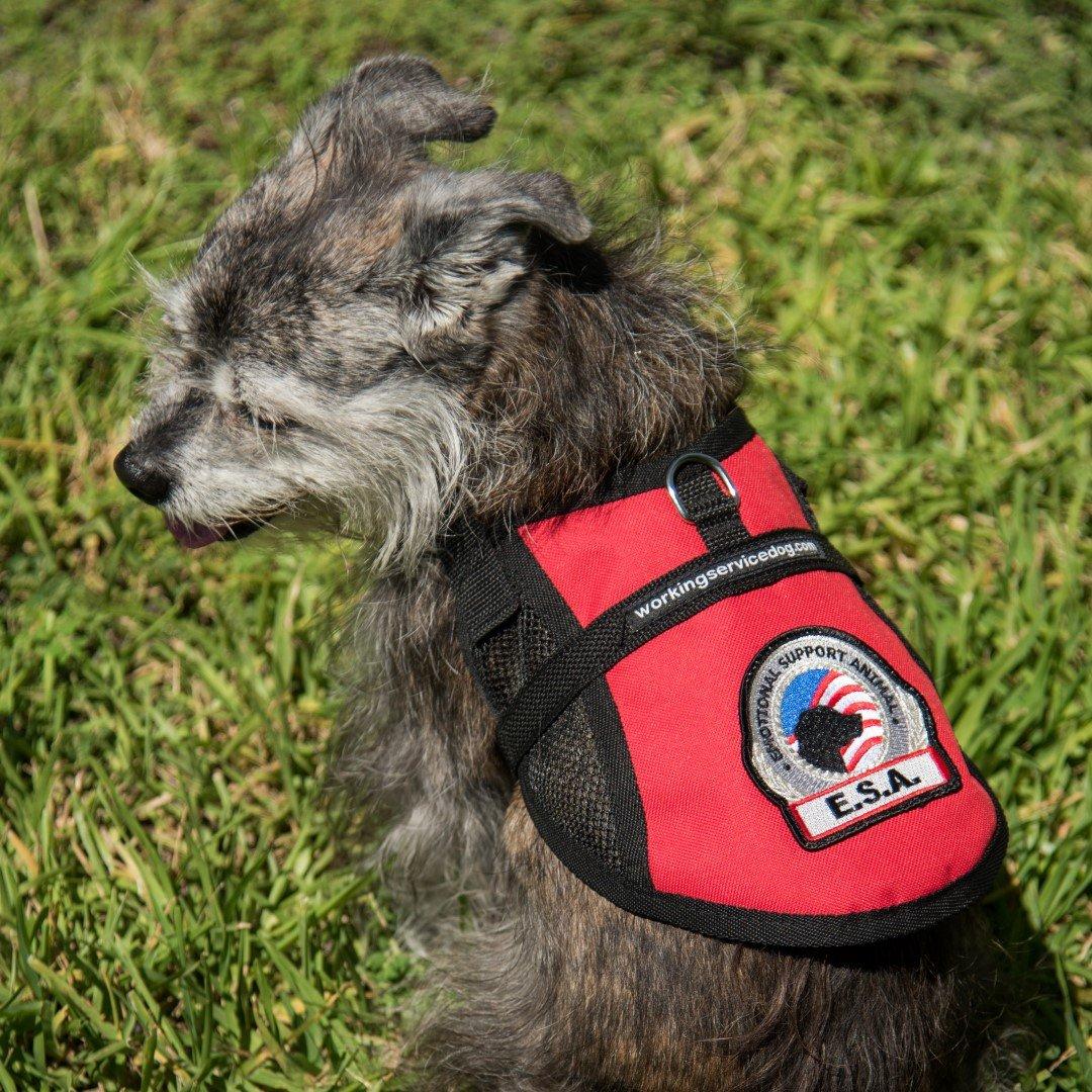 Premium Small Dog Emotional Support Dog ESA Mesh Vest (15'' - 18'' Girth (XS), Red)