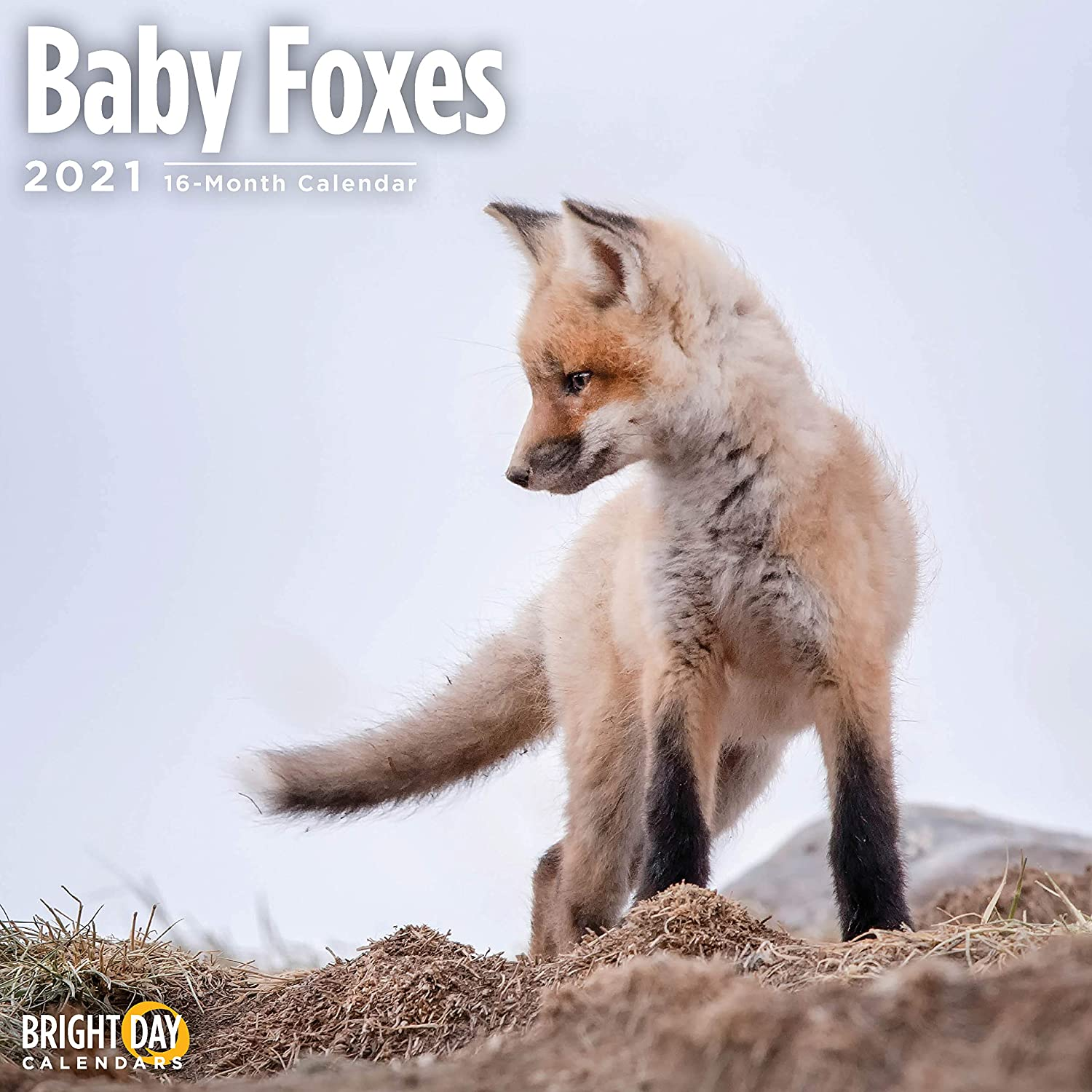 2021 Baby Foxes Wall Calendar by Bright Day, 12 x 12 Inch, Cute Wild Animal