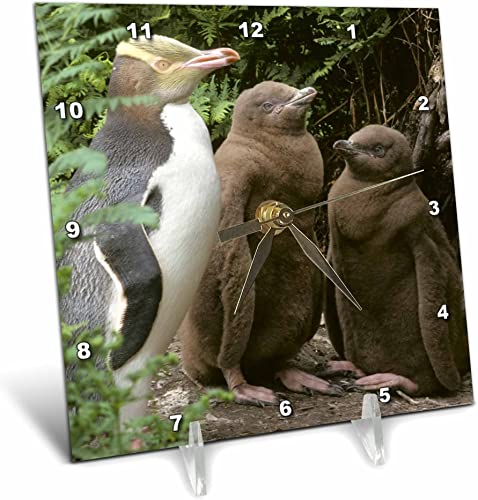 3dRose dc_74168_1 Yellow-Eyed Penguin, New Zealand-Au02 Ksc0015-Kevin Schafer-Desk Clock, 6 by 6-Inch