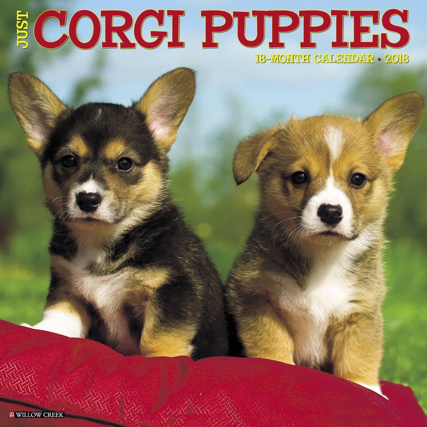 Just Corgi Puppies 2018 Calendar: Willow Creek Press