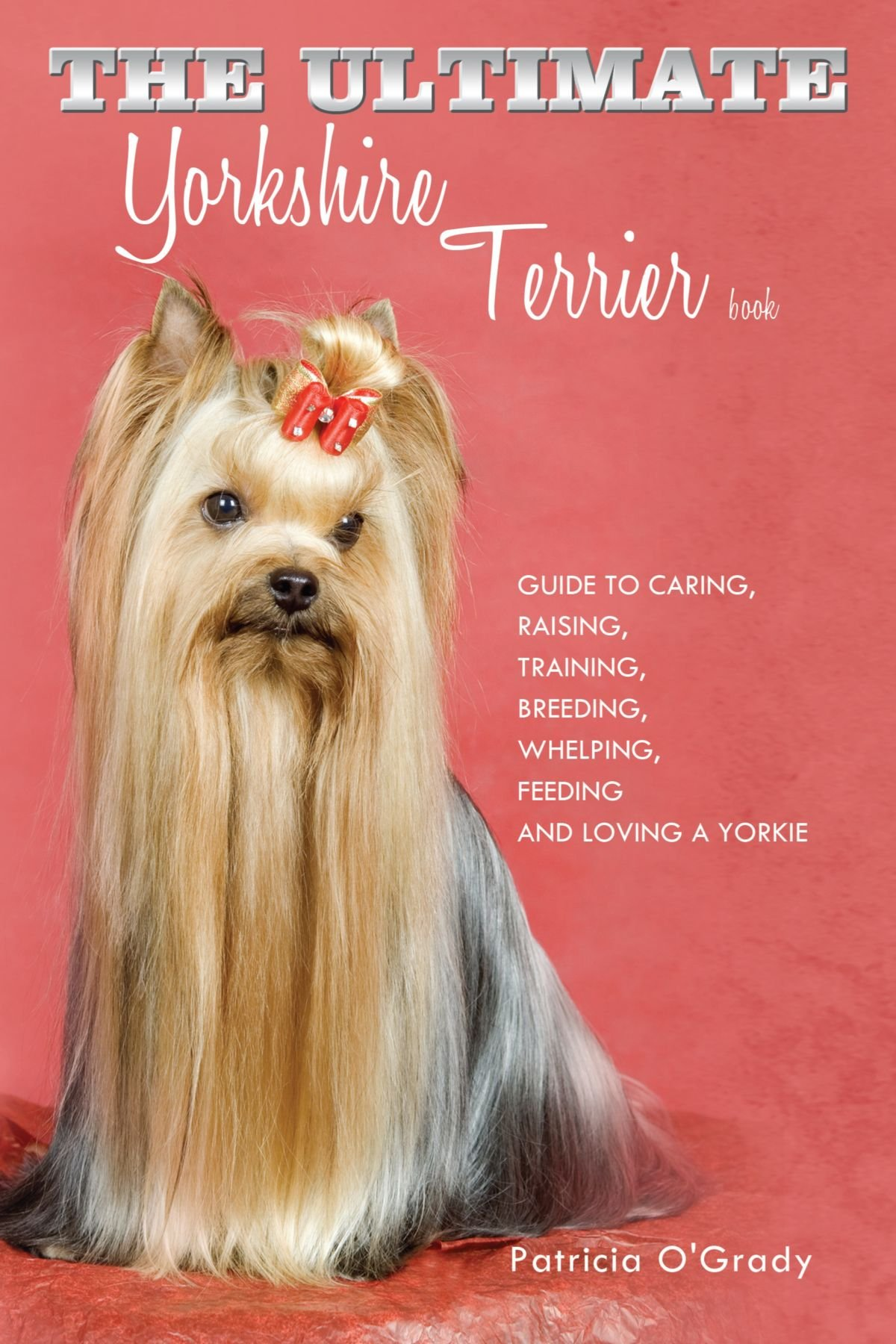 How to care for a Yorkshire terrier Yorkshire terrier - care, food, character, reviews 11