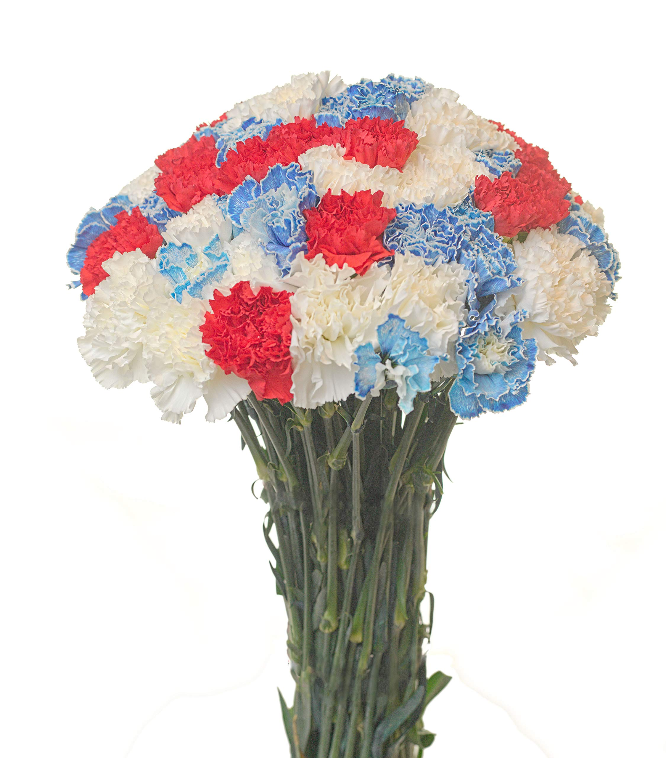 Carnations Special Holidays Pack (150, Patriotic) by Flower Prime