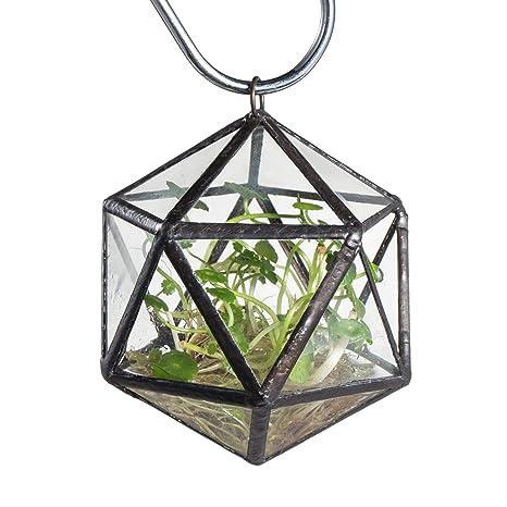 Amazon Com Hanging Clear Glass Geometric Terrarium Display Small
