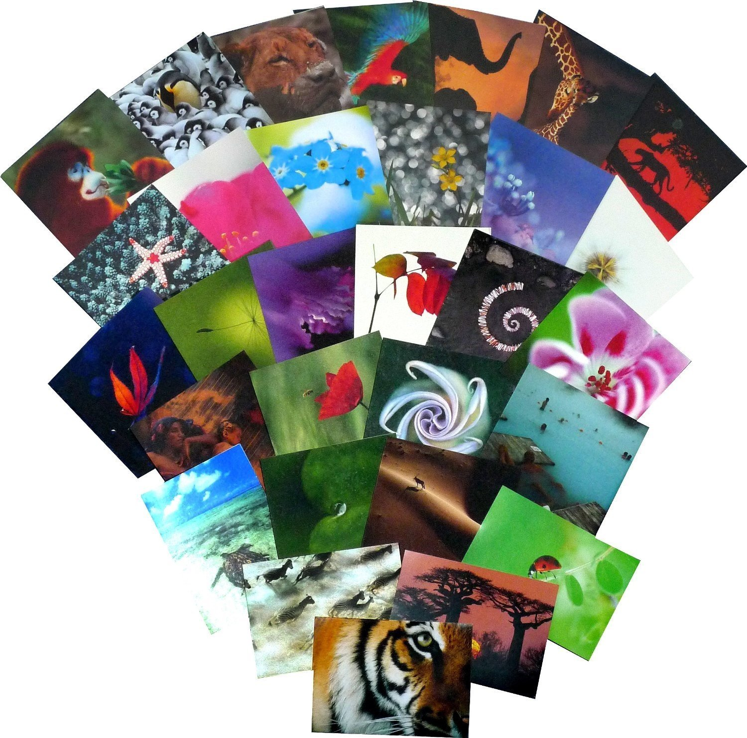 Great value greetings card collection. 30 Carbon Neutral 'The Natural World' cards (all different designs). BritanniaCards S476KP08