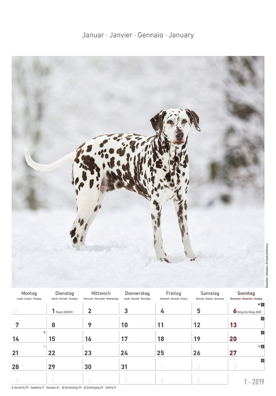 "Calendario da muro /""Cani/"" 2019 23,7x34 cm"
