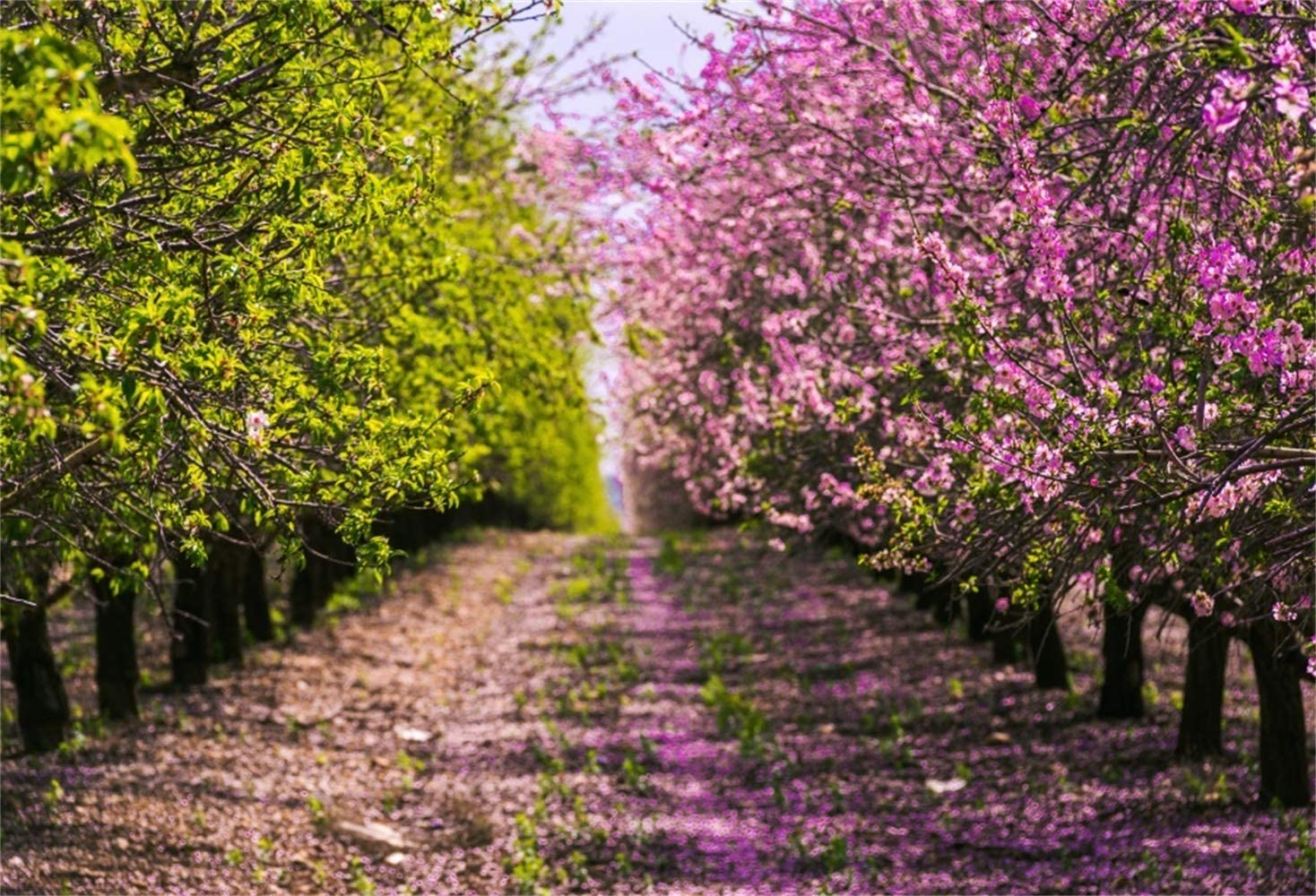 Amazon Com Laeacco Spring Green Trees Blooming Purple Flowers
