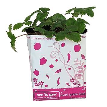 Botanicoir SIG0003 - Ver que gro mini bolso rosado siembra sin turba: Amazon.es: Jardín