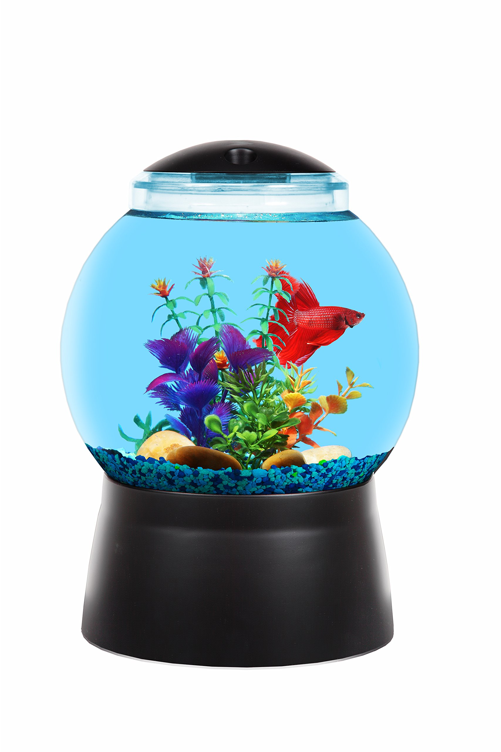BettaTank 1-Gallon Fish Bowl with LED Lighting by Koller Products