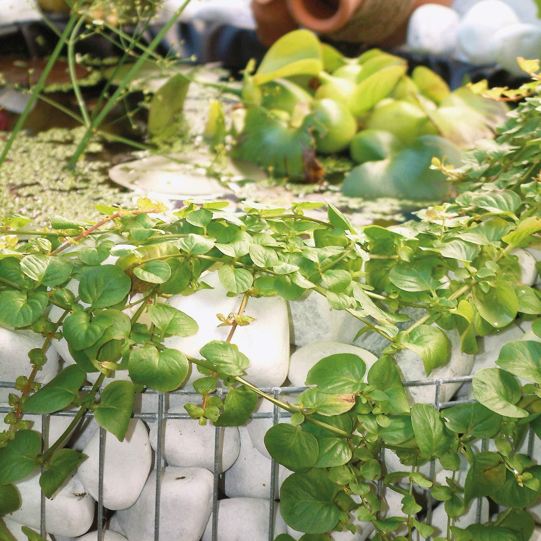 BELLISSA Garden High Pond Gabion 160 Liter Diameter 92 Centimeter