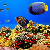 Undersea: Free game
