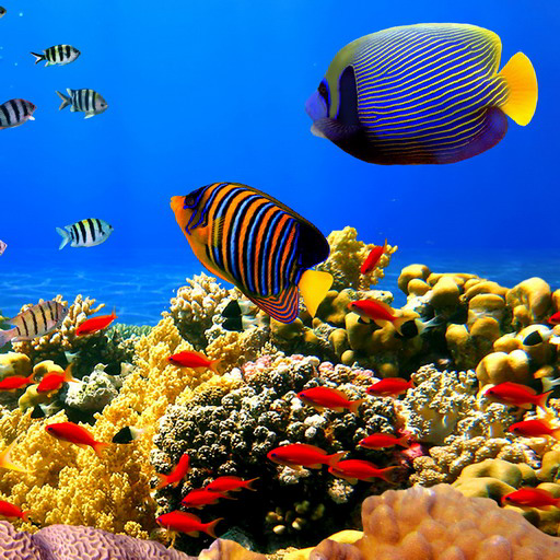 - Undersea: Free game