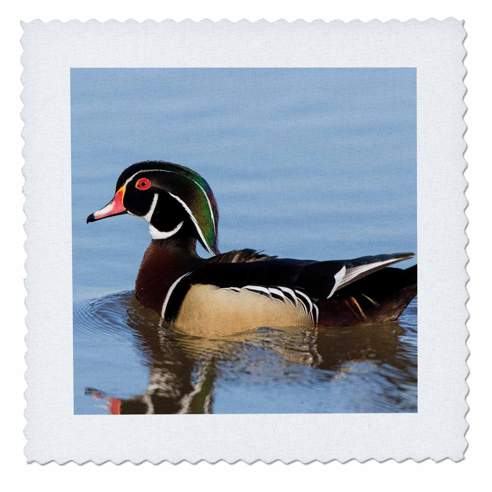 3dRose Danita Delimont - Ducks - Wood Duck male in wetland, Marion County, Illinois - 18x18 inch quilt square (qs_259324_7)