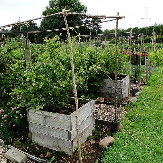 ETSAMOR Redes Anti-pájaros Estanque de Red 3, 5x7 M Red de Aves de Corral: Amazon.es: Jardín
