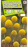 タキイ種苗 クラスペディアグロボーサゴールドスティック