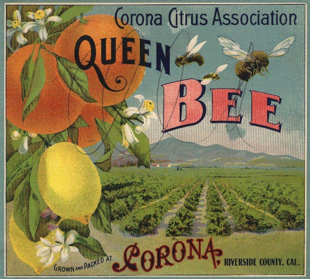 Queen Beeブランド – コロナ、カリフォルニア – Citrusクレートラベル 36 x 54 Giclee Print LANT-57872-36x54 36 x 54 Giclee Print  B01MG3JYK9