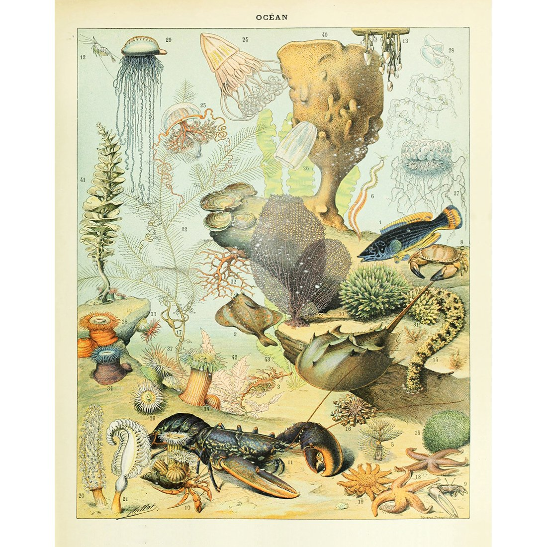Amazon.com: Meishe Art Vintage Poster Print Biology Botanical ...