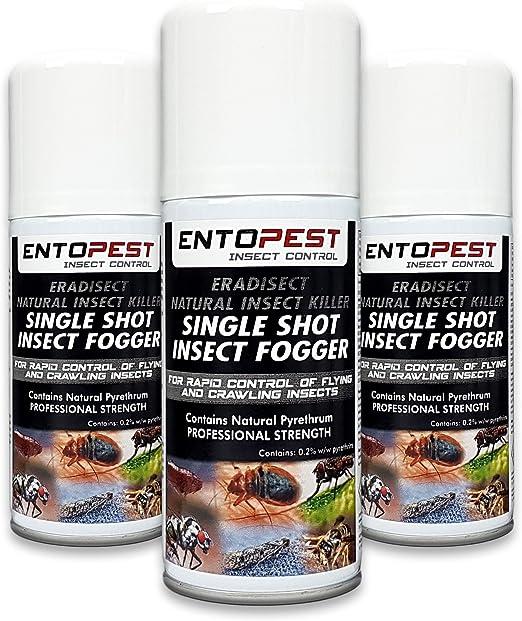 Entopest 3 x 150 ml insecticida para Matar Insectos, Control de fumigador de Fuerza Profesional: Amazon.es: Jardín