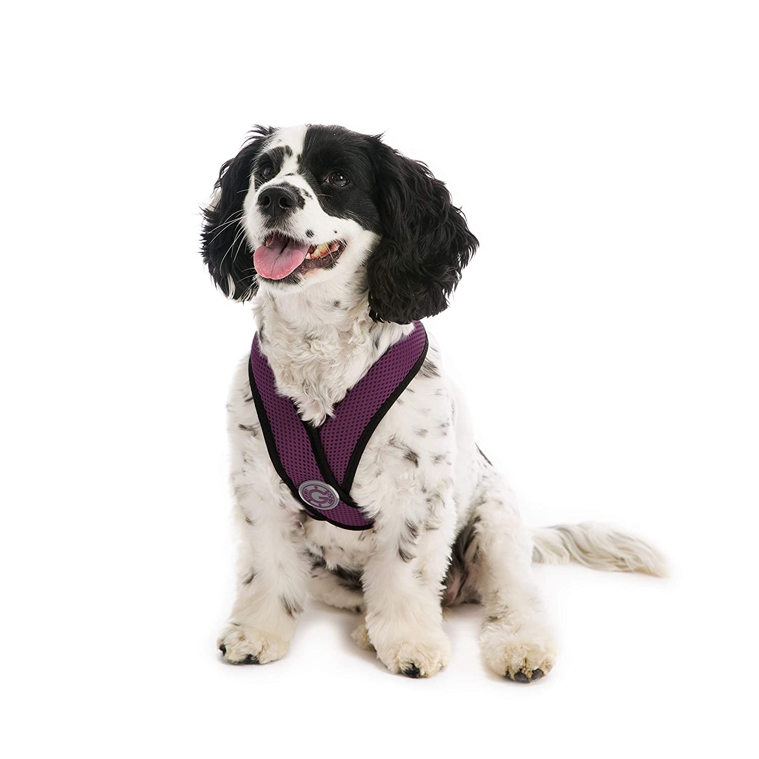 Purple XLGooby Gooby Choke Free Comfort Soft Dog Harness, Black, XLarge