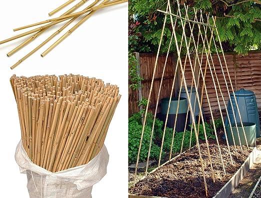 Wilsons Direct Bastones de madera natural de bambú resistentes para macetas de jardín, barra gruesa para cañas de jardín, 3 pies, 4 pies, 5 pies, 6 pies, 7 pies: Amazon.es: Jardín