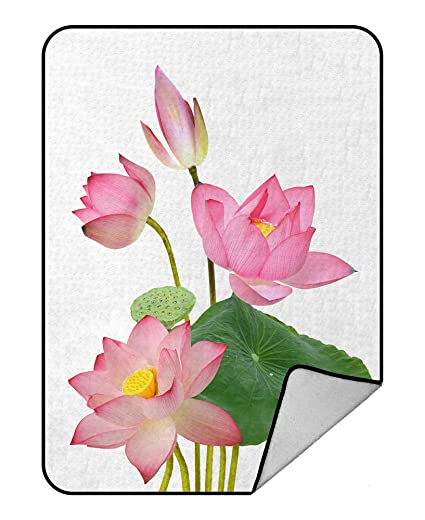 Amazoncom Abphqto Beautiful Pink Lotus Flower Bouquet Isolated On