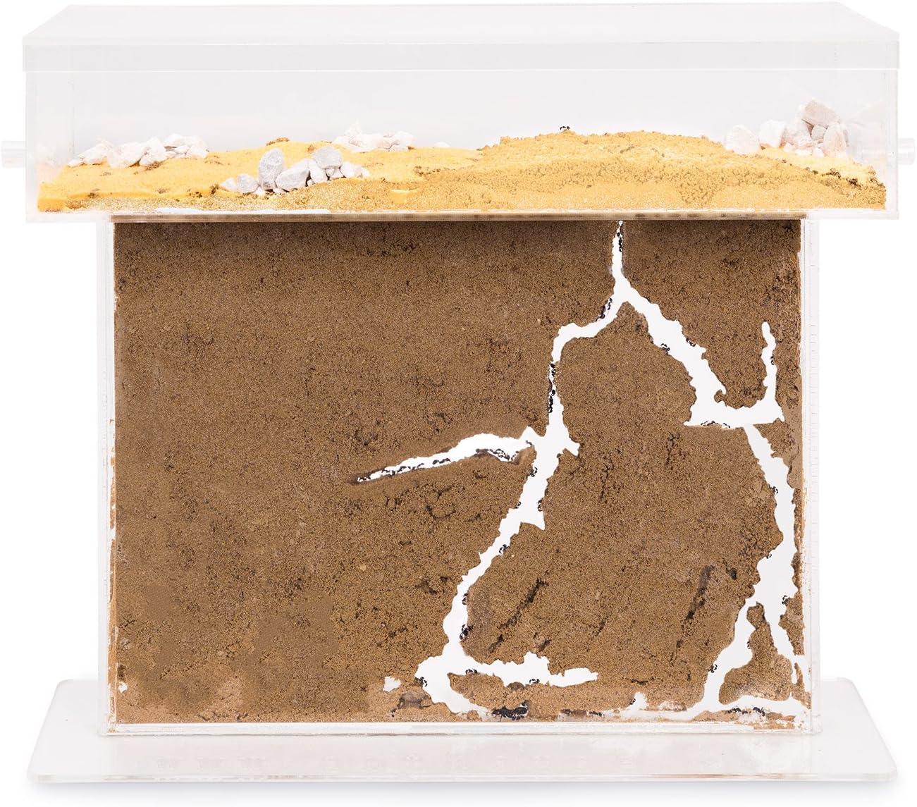 Sand Ant Farm Basic Anthill, Formicarium, Educational, Ants