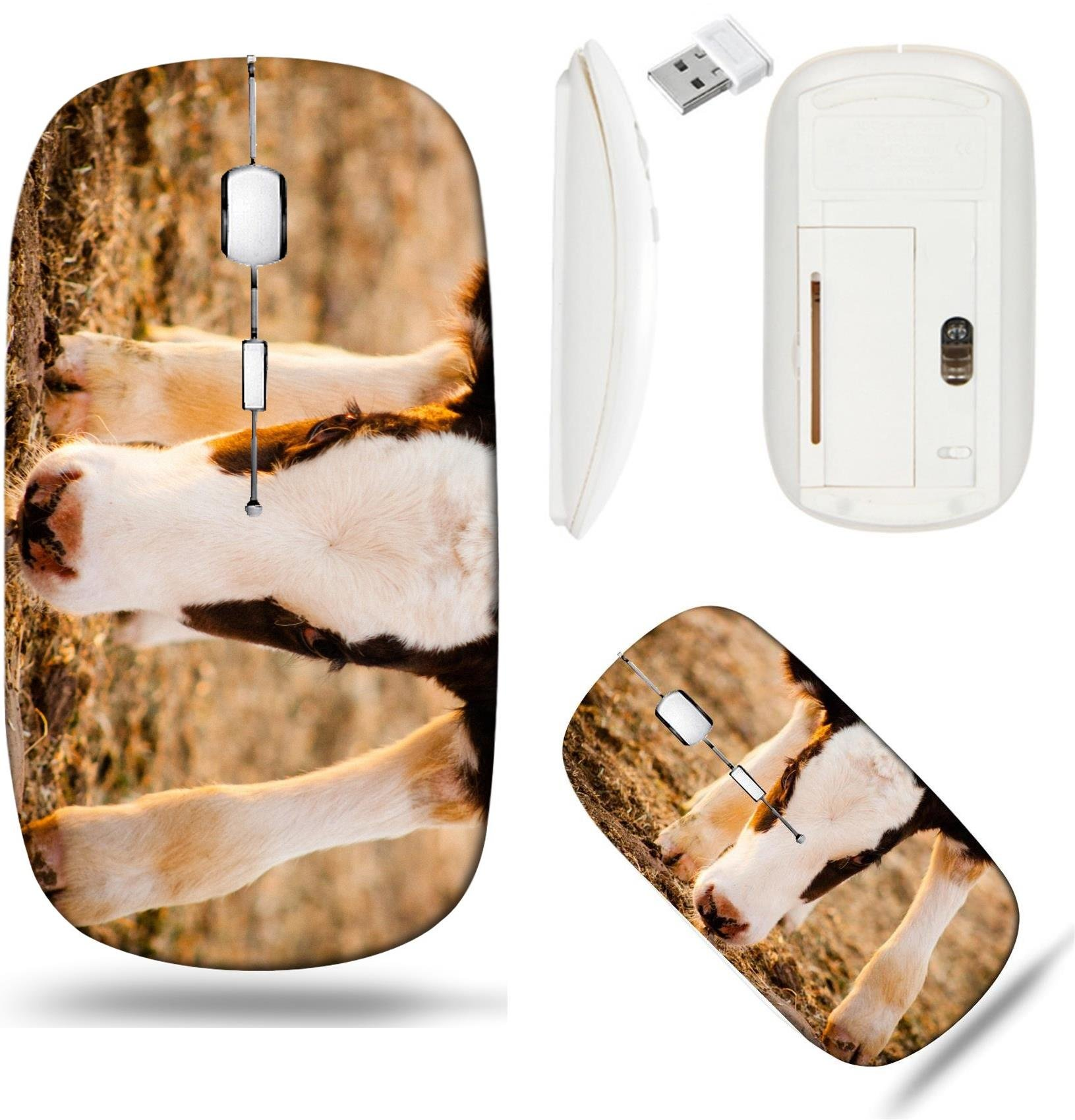 Liili Wireless Mouse White Base Travel 2.4G Wireless Mice with USB Receiver, Click with 1000 DPI for notebook, pc, laptop, computer, mac book Newborn calf cow watching at the camera Photo 20944614