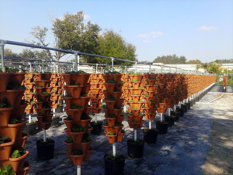 Amazon.com: bricolaje Vertical Jardinería Macetas ...