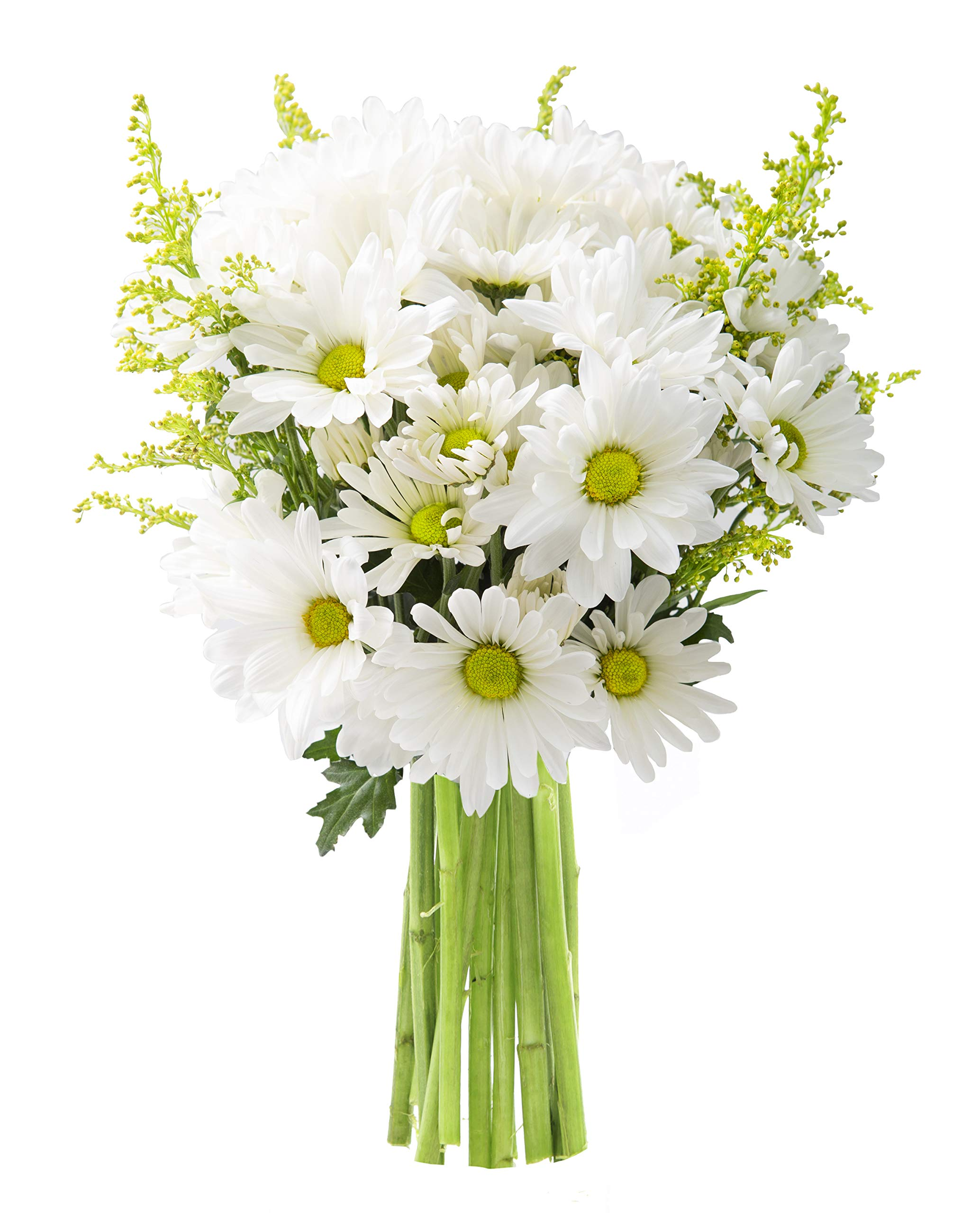 KaBloom Bountiful Beauty Bouquet of Fresh White Daisies by KaBloom