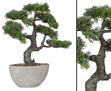 Asiatische Pflanzen amazon de auslauf bonsai zeder dekopflanze 43cm in schale