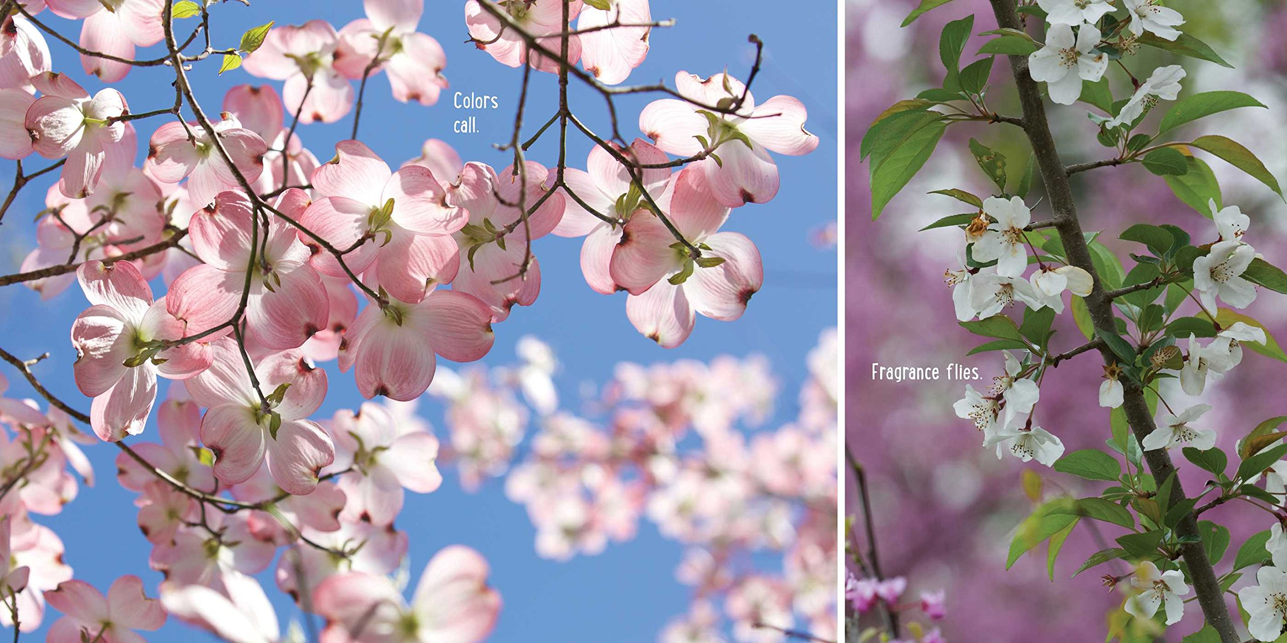 Image result for bloom boom april pulley sayre