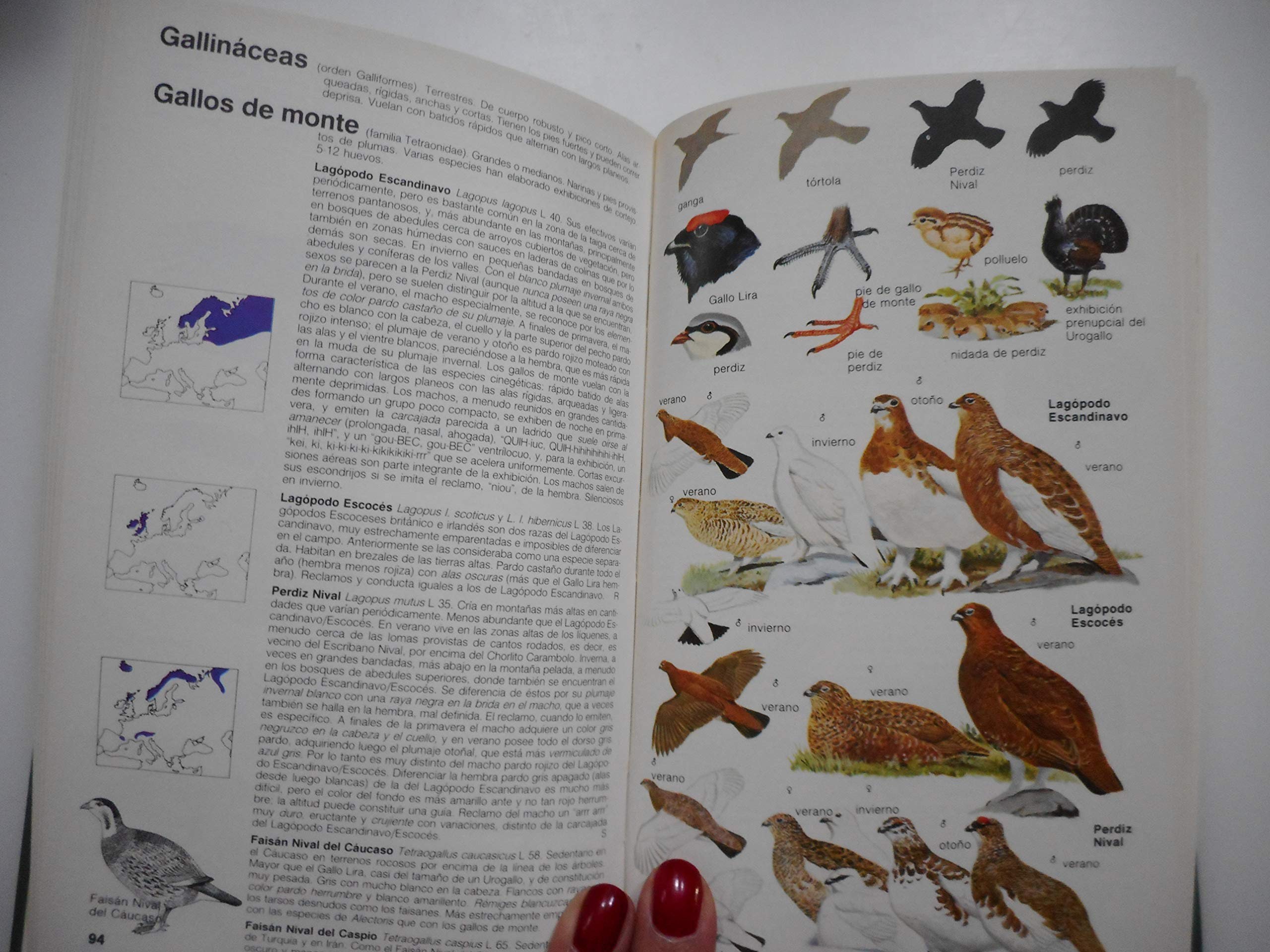 GUIA CAMPO DE LAS AVES DE ESPAÑA Y EUROPA: C. LIFE GUIDE BIRDS GUIAS DEL NATURALISTA: Amazon.es: BRUUN, SINGER: Libros