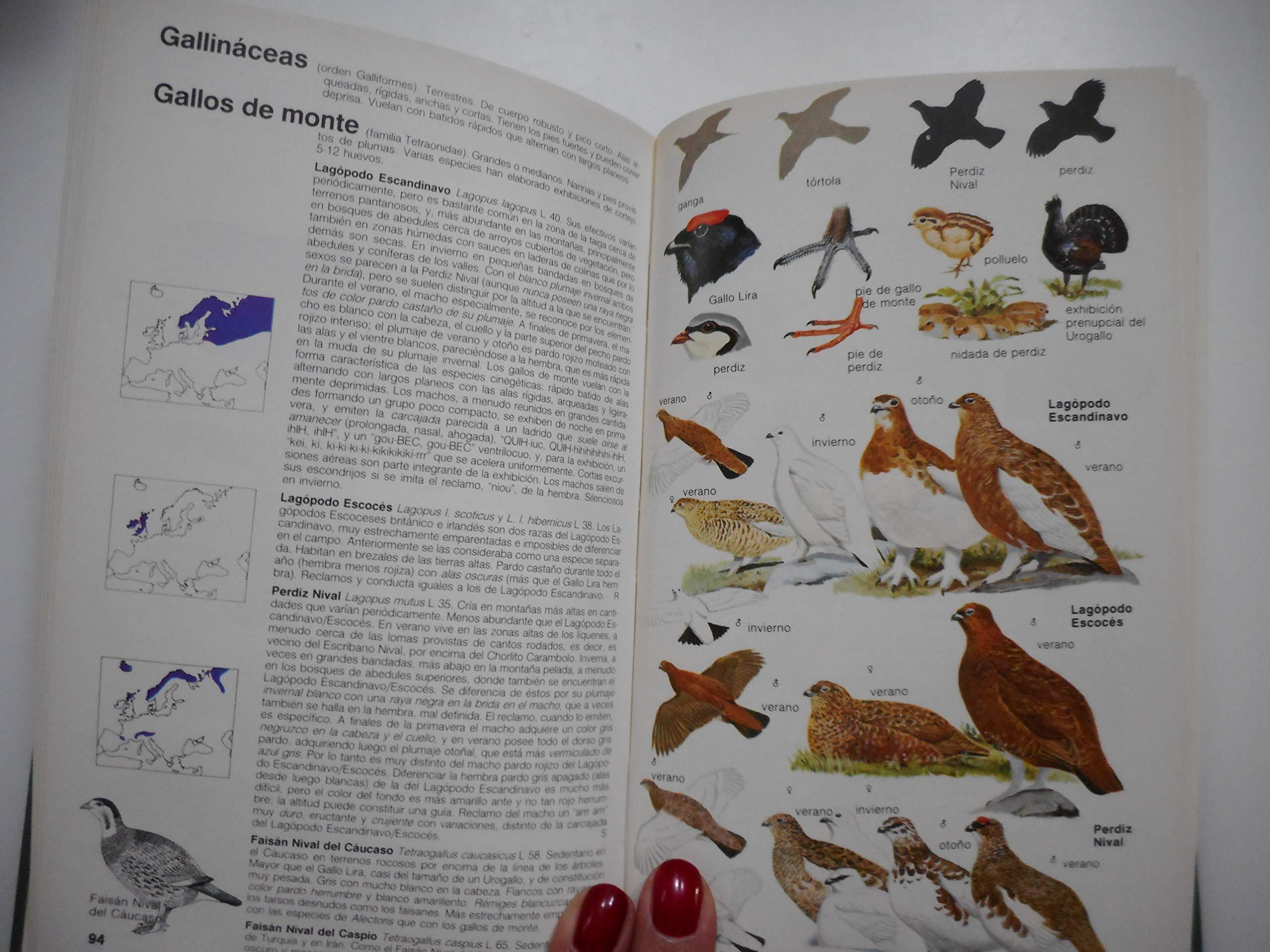 GUIA CAMPO DE LAS AVES DE ESPAÑA Y EUROPA: C. LIFE GUIDE BIRDS ...