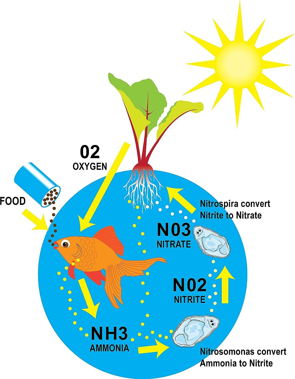 Aquarium fish tank cycle - Amazon Com Eco Cycle Aquaponics Kit W Dual T5 Grow Light Pet Supplies