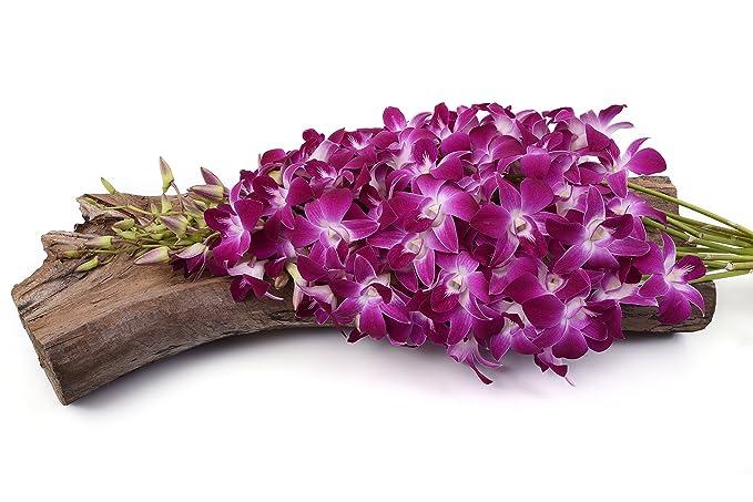 Just Orchids - Premium Long Stem Purple Dendrobium