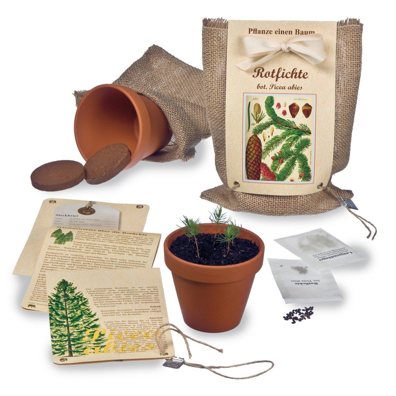 Pflanze einen Baum - Baumsaat-Set Rotfichte FloraPresenta