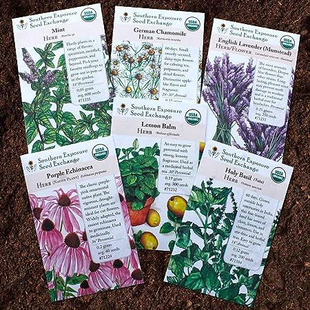 Amazon.com: Semillas de jardín de té de hierbas - Manzanilla ...
