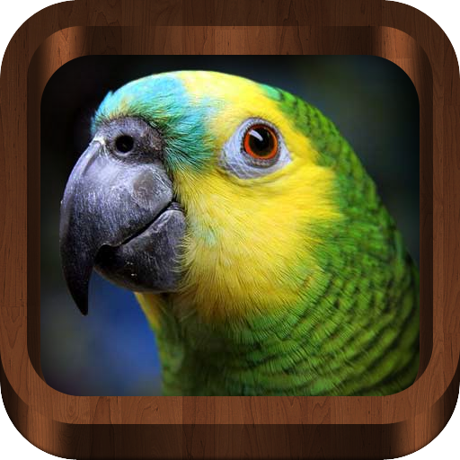 (Bird Calls - Bird Guide with 2000+ Bird Songs & Sounds (Mobile, Tablets))