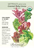 Lettuce Baby Mesclun Gourmet Certified Organic Heirloom Seeds 1200 Seeds