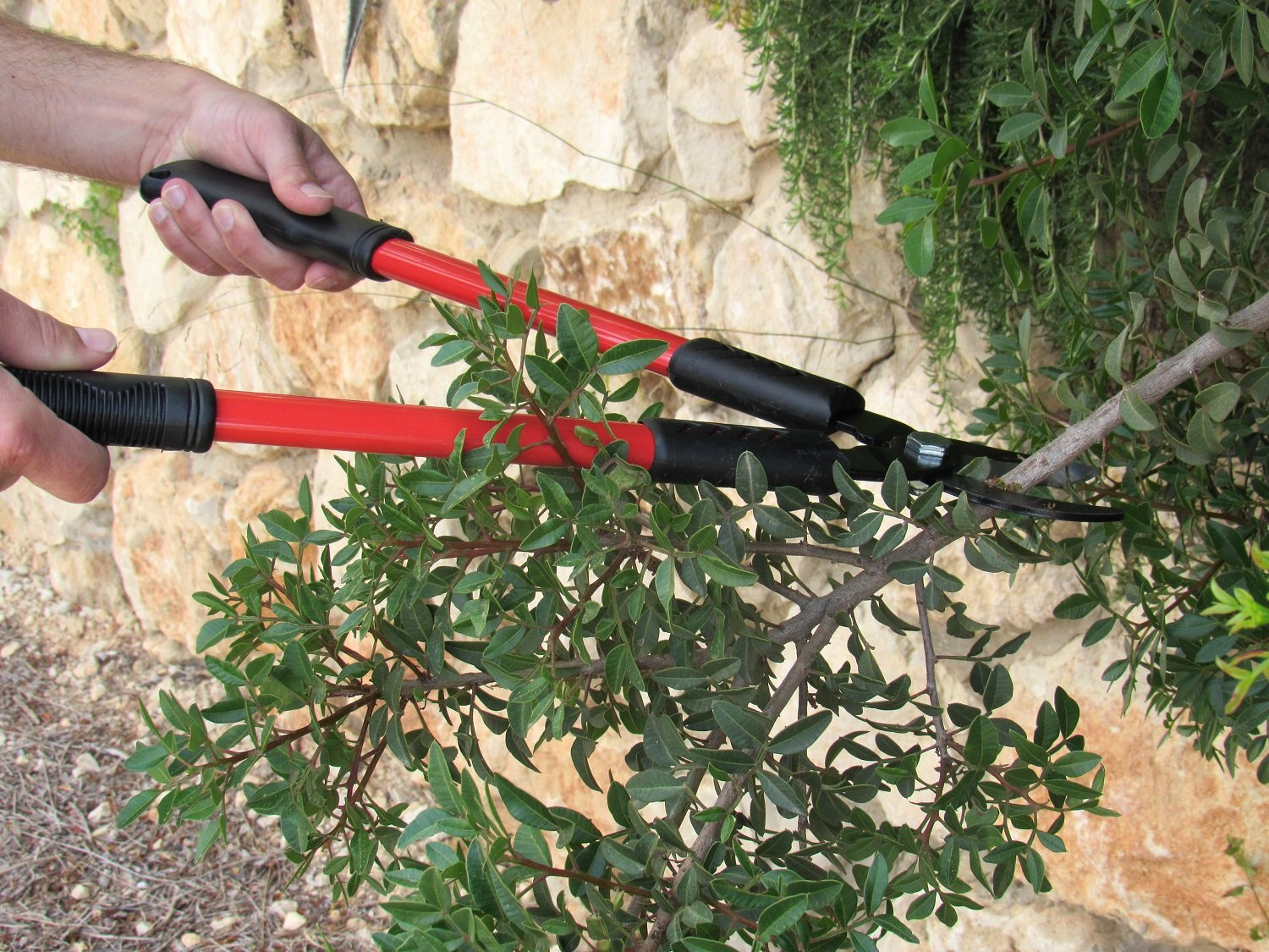 Best Tree Pruner Reviews and Buying Guide 4