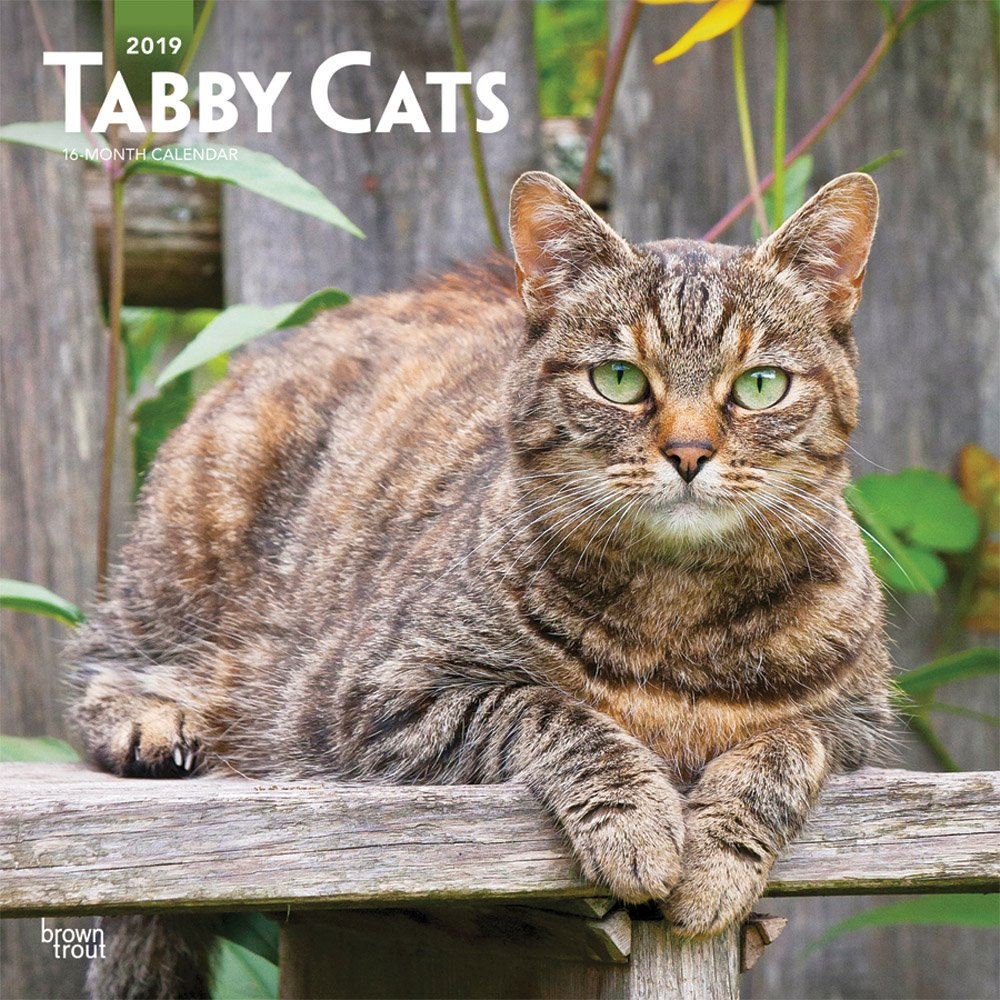 Tabby Cats 2019 12 x 12 Inch Monthly Square Wall Calendar, Animals Cats (Multilingual Edition)