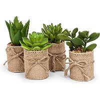 Abbott colección Verde Suculentas en Burlap Wrap Acento en la decoración del hogar (Set de 4)