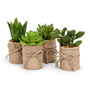 Abbott Collection Set of 4 Green Succulents in Burlap WRAP